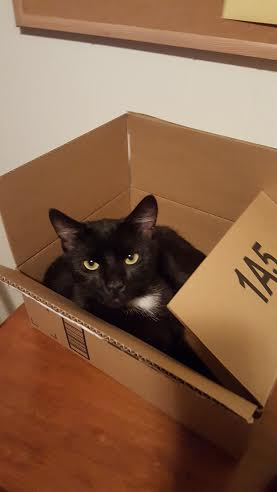 """It's not a diamond ring, it's not a fancy car, and it's not a house in the hills.  It's a cat in a box."""