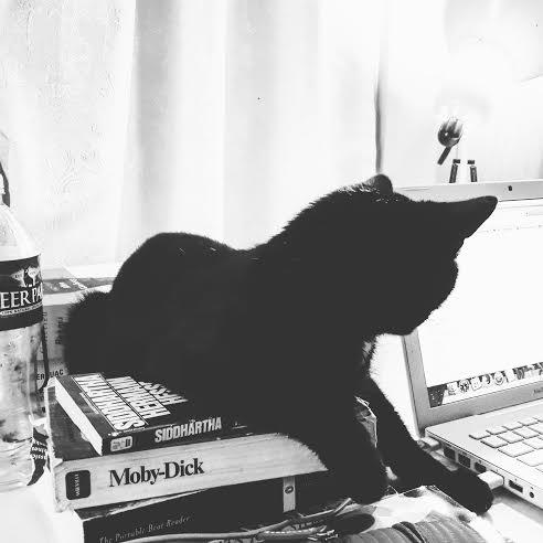 Diane Kitten Books Instagram