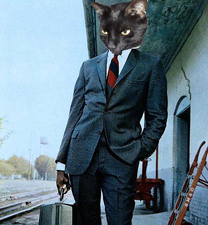 Sidney Poitier Mr Tibbs Cat Face